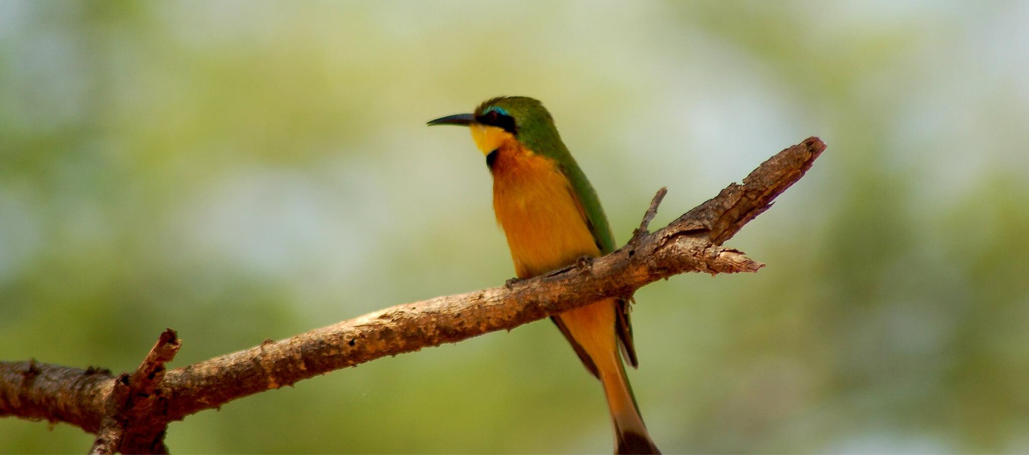 about-bird