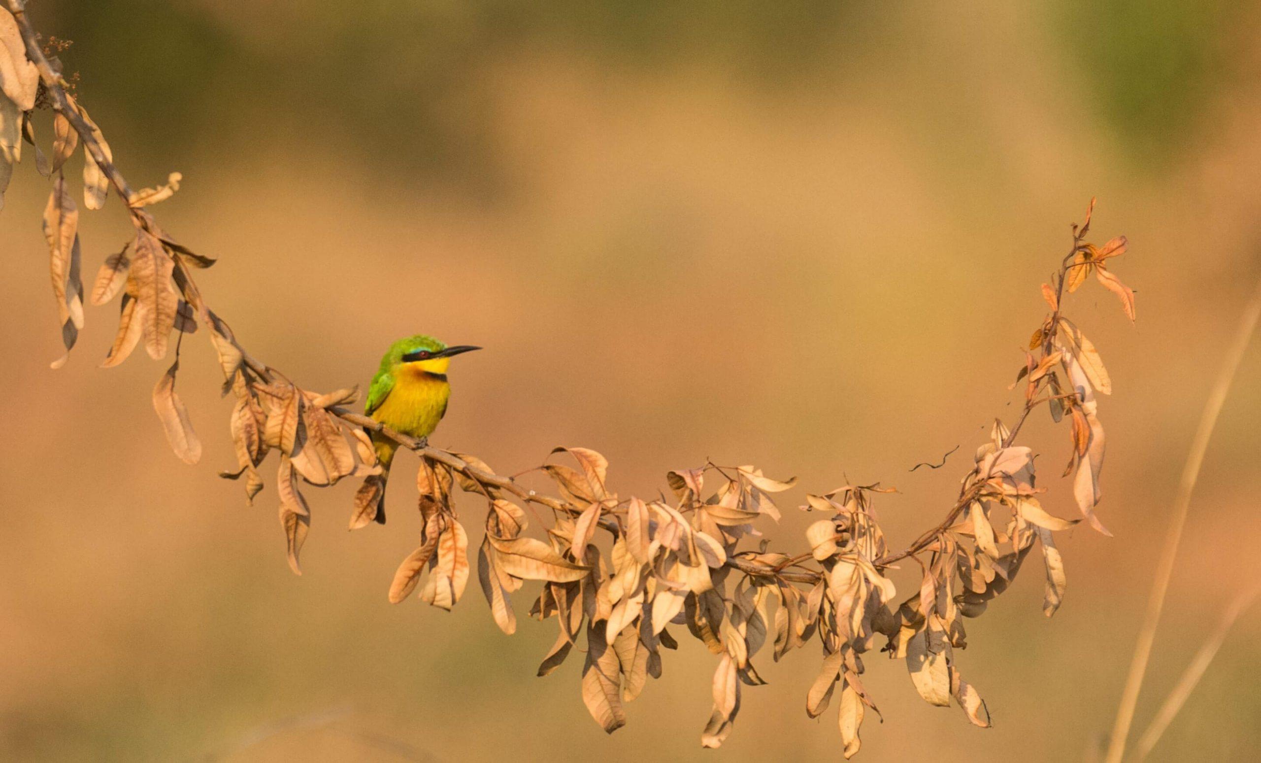 about-bird-banner